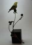 Winter Goldfinch and Black-eyed Susans SOLD