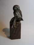 Lifesize Northern Pygmy Owl SOLD
