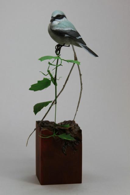 Loggerhead Shrike and Mantis sold