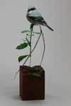 Loggerhead Shrike and Mantis