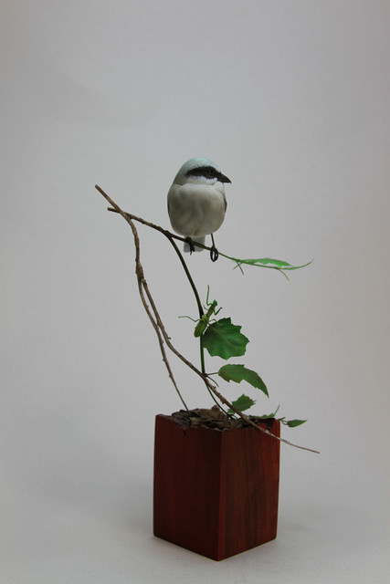 Side View, Loggerhead Shrike