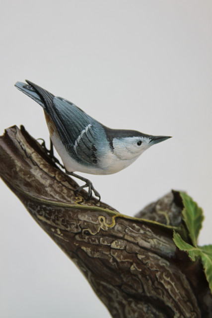 Detail, White-breasted Nuthatch