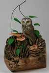 Saw Whet Owl