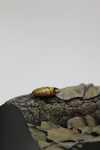 Hercules Beetle Detail