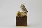 1St Place Miniature Birds Of Prey