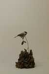 black-capped chickadee Sold