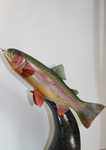 Lifesize Cutthroat Trout
